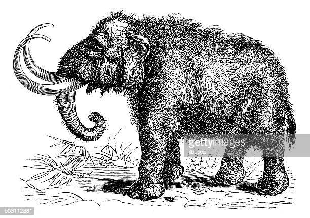 antique illustration of mammoth - images of mammoth stock illustrations
