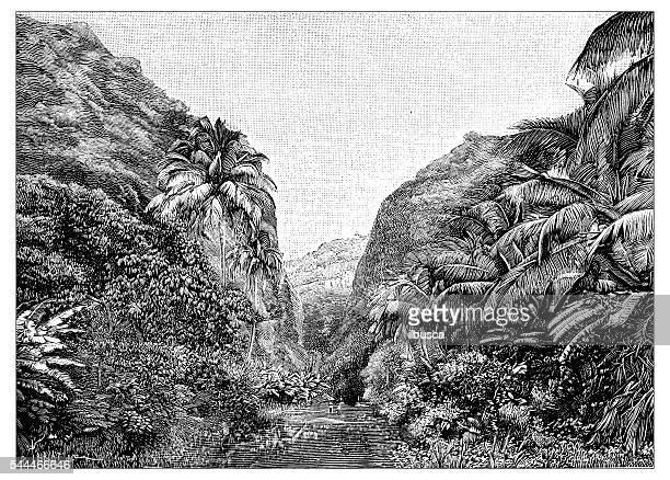 antique illustration of martinique valley - martinique stock illustrations
