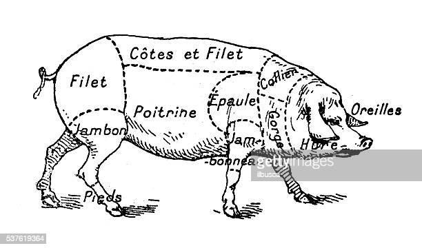 Antique illustration of pork swine pig meat section (french)