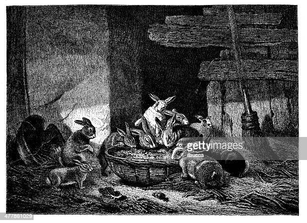 antique illustration of rabbits eating - leprosy stock illustrations