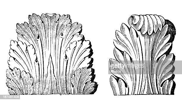 Antique illustration of Roman Acanthus (ornament)
