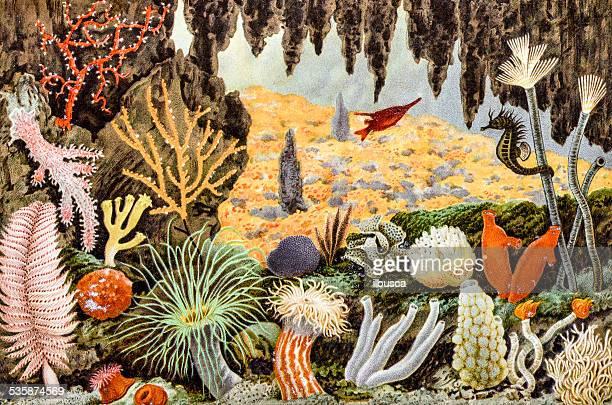 ilustraciones, imágenes clip art, dibujos animados e iconos de stock de anticuario ilustración de los animales al mar - grupo grande de animales