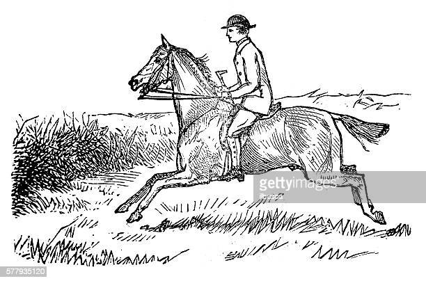 Antique illustration of sports and exercises: Horseback riding