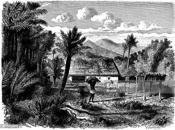 antique illustration of tobacco harvesting - tobacco crop stock illustrations, clip art, cartoons, & icons