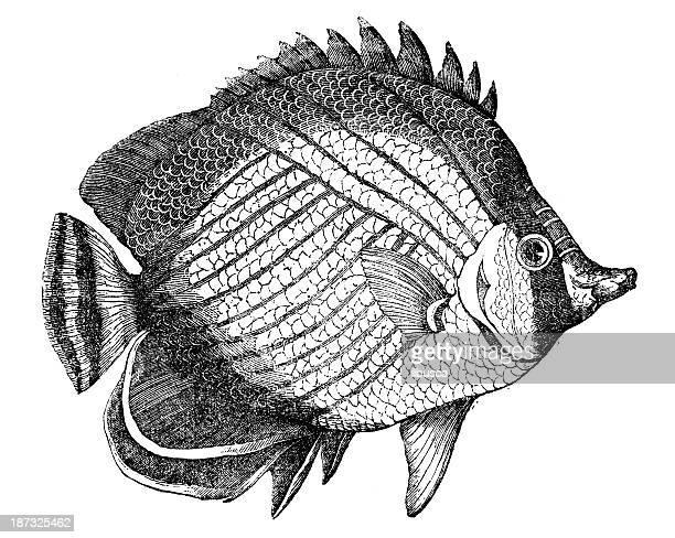 Illustrations et dessins anim s de poisson de mer getty images - Dessins de poissons de mer ...