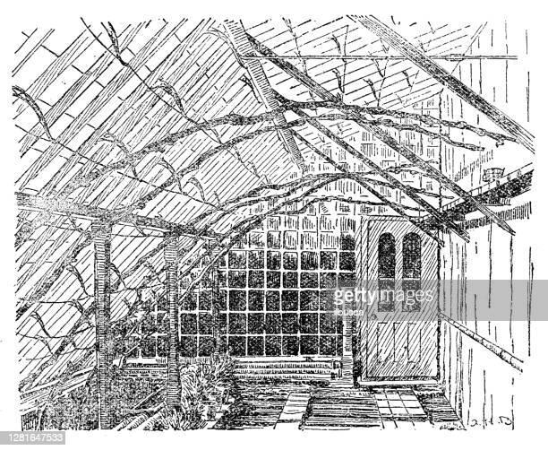 """illustrazioni stock, clip art, cartoni animati e icone di tendenza di antique illustration of vineyard grape training - """"ilbusca"""""""