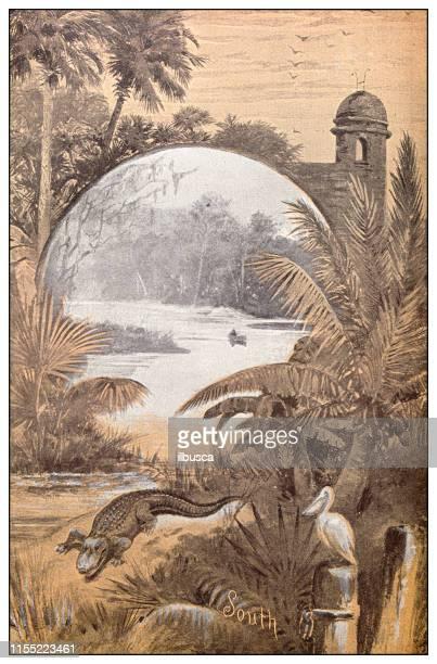 antique image: southern usa landscape - florida gators stock illustrations