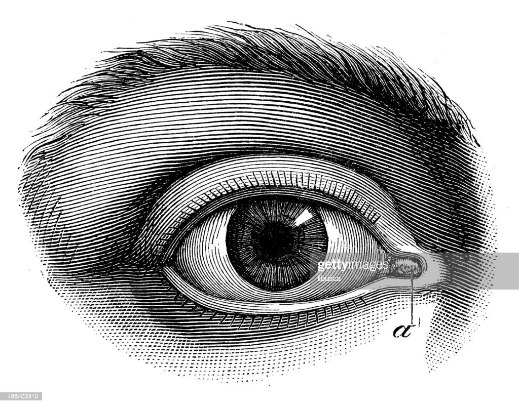 Antique medical scientific illustration high-resolution: human eye : stock illustration