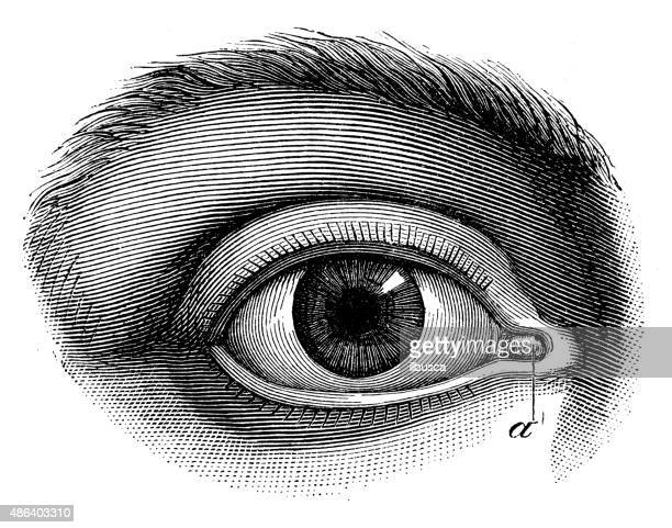 Antique medical scientific illustration high-resolution: human eye