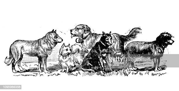 Antique old French engraving illustration: Dogs