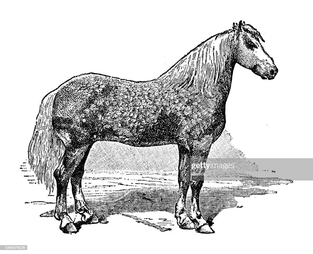 Antique Old French Engraving Illustration Horse High Res Vector Graphic Getty Images