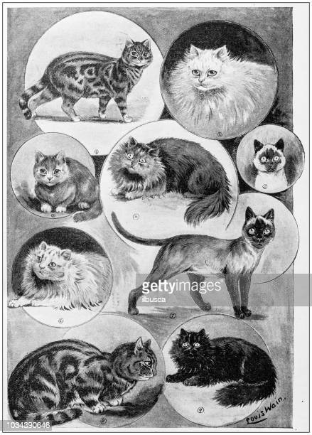 Antique painting illustration: Cats