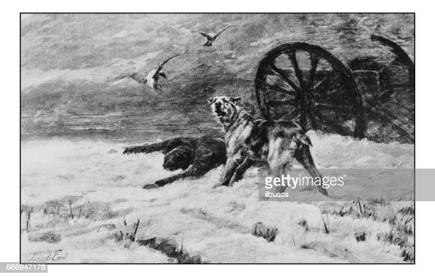 Antique photo of paintings: Dog of war