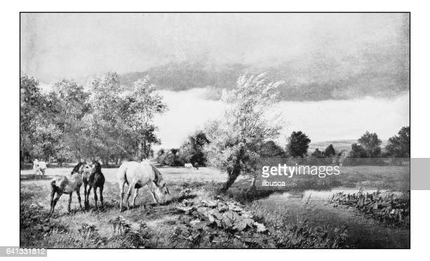 antique photo of paintings: landscape - horse family stock illustrations, clip art, cartoons, & icons