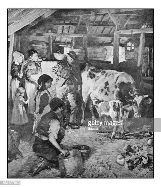 ilustraciones, imágenes clip art, dibujos animados e iconos de stock de fotos antiguas de pinturas: el becerro nuevo - ternera