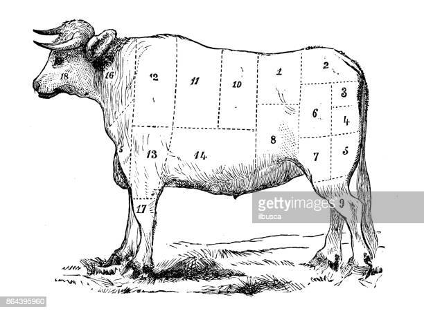 antique recipes book engraving illustration: beef sections - wild cattle stock illustrations, clip art, cartoons, & icons