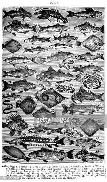 Antique recipes book engraving illustration: Fish / Seafood