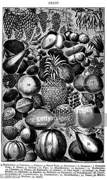 Antique recipes book engraving illustration: Fruit
