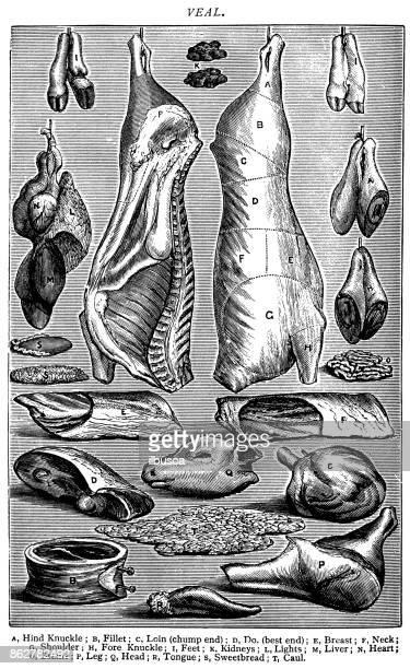 Antique recipes book engraving illustration: Veal