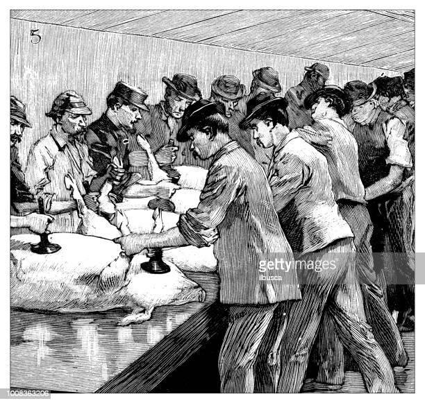 ilustraciones, imágenes clip art, dibujos animados e iconos de stock de antigua ilustración científica grabado: carnicero matadero - matadero