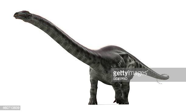illustrazioni stock, clip art, cartoni animati e icone di tendenza di apatosaurus dinosaur, artwork - erbivoro