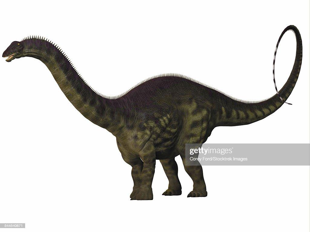 Apatosaurus dinosaur. : stock illustration