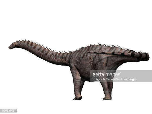 Apatosaurus is a sauropod dinosaur from the Jurassic Period.