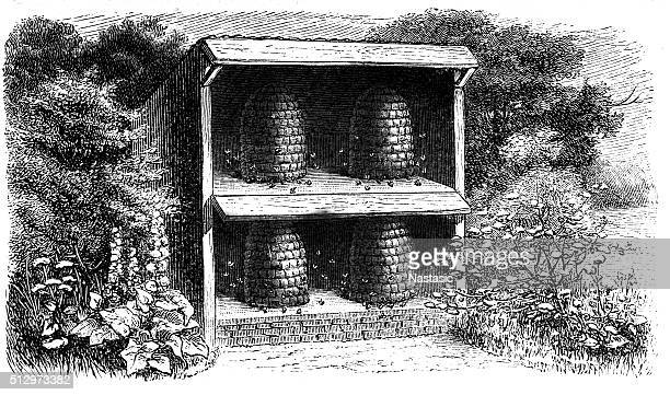 illustrations, cliparts, dessins animés et icônes de apiary - ruche