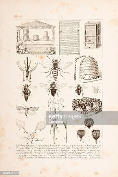 illustrations, cliparts, dessins animés et icônes de gravure des abeilles et d'apiculture - ruche