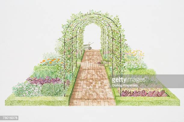 apple and pear trees on arched trellis, flanked by vegetable, herb and flower beds - endive stock illustrations, clip art, cartoons, & icons