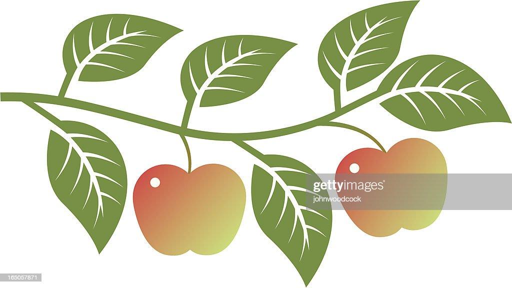 Apple branch