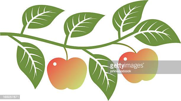 アップルの枝