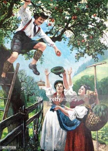 Apple harvest - young man throws apples down to women