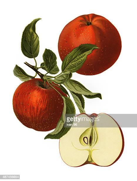 apple - apple tree stock illustrations