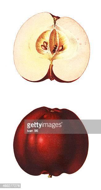 ilustraciones, imágenes clip art, dibujos animados e iconos de stock de manzanas - manzana