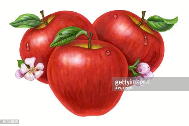 apples - 新鮮点のイラスト素材/クリップアート素材/マンガ素材/アイコン素材