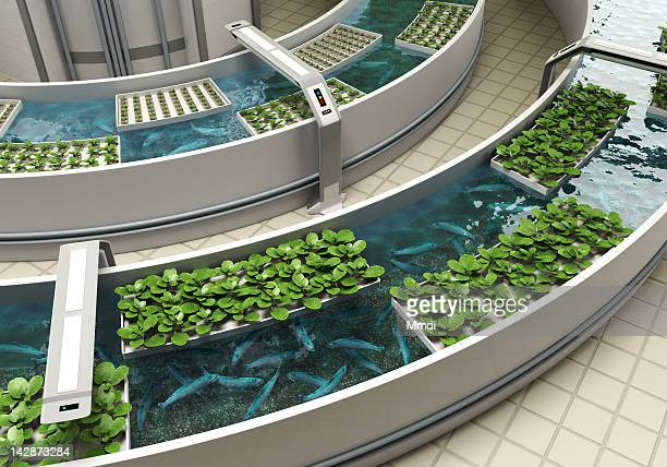 aquaponics detail - food and drink stock illustrations
