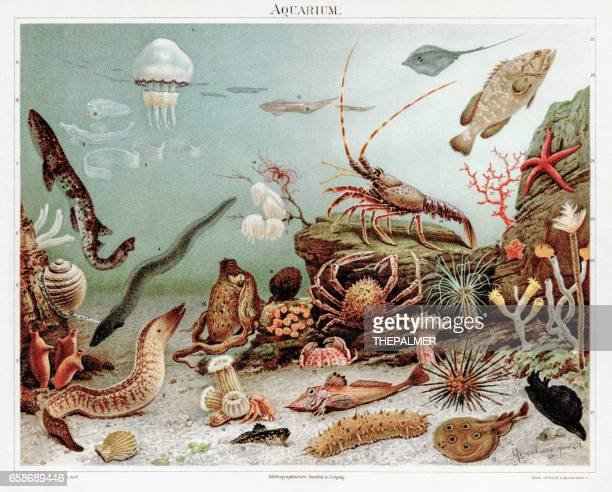 ilustrações, clipart, desenhos animados e ícones de aquário chromolithograph 1895 - impressão ilustração