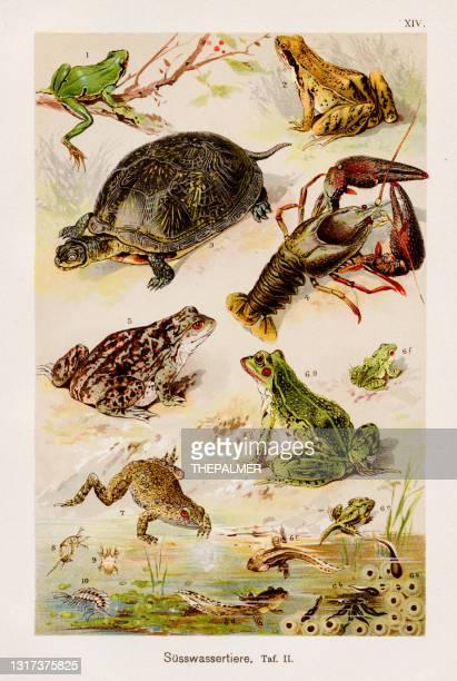 水生淡水動物クロモリソグラフィー 1899年 - 脊椎動物点のイラスト素材/クリップアート素材/マンガ素材/アイコン素材