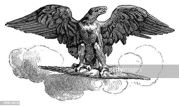 aquila - roman imperial eagle - spread wings stock illustrations