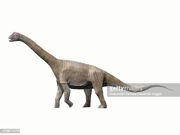 Aragosaurus ischiaticus, sauropod from the Early Cretaceous of Spain.