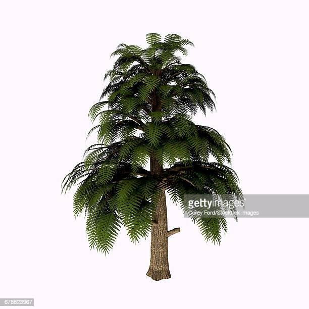 Archaeopteris tree isolated on white background.