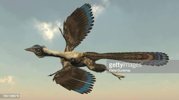 ilustraciones, imágenes clip art, dibujos animados e iconos de stock de archaeopteryx bird flying in the sky. - triásico