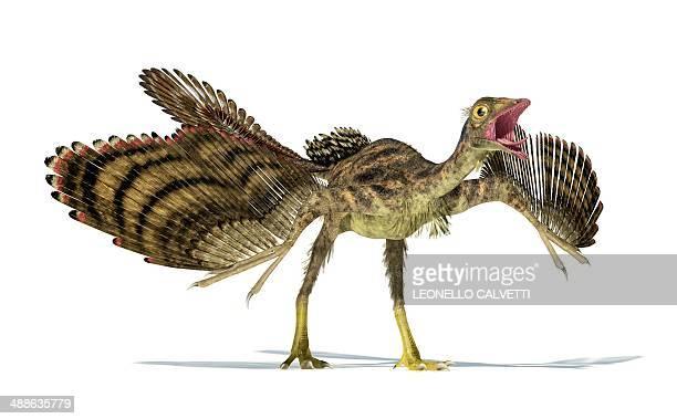archaeopteryx dinosaur, artwork - jurassic stock illustrations