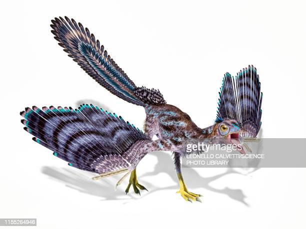 ilustrações, clipart, desenhos animados e ícones de archaeopteryx dinosaur, illustration - era prehistórica