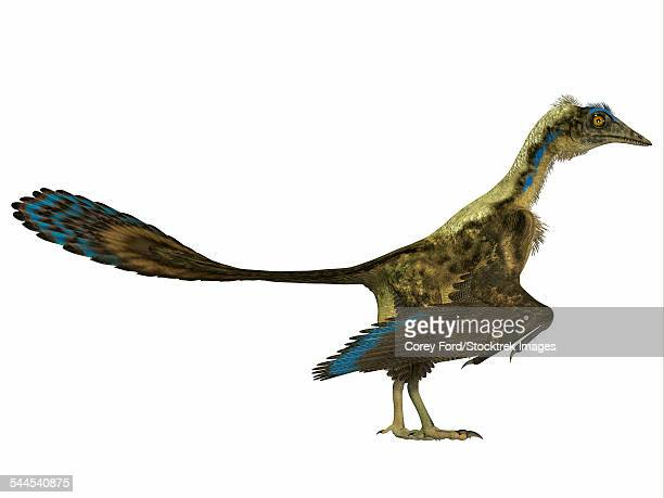 archaeopteryx prehistoric bird. - paleontology stock illustrations