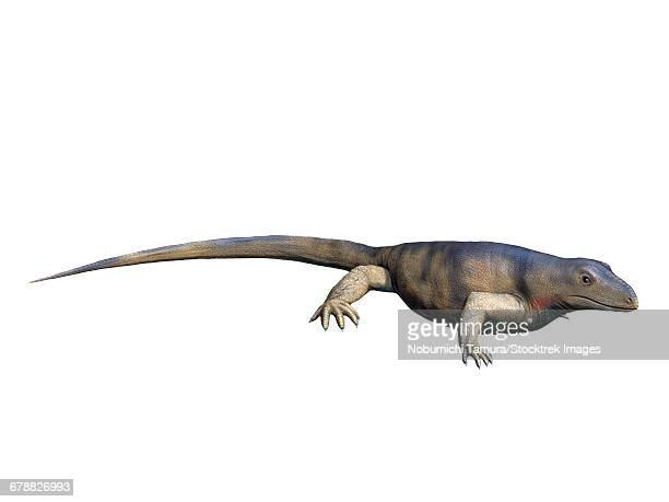 Archaeothyris florensis is an extinct synapsid from the Late Carboniferous Period of Canada.