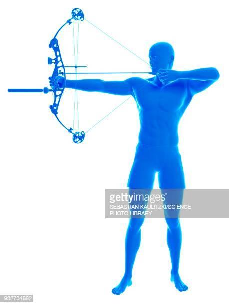 archer, illustration - archery stock illustrations