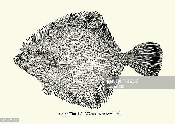 Flounder Stock Illustrations And Cartoons | Getty Images