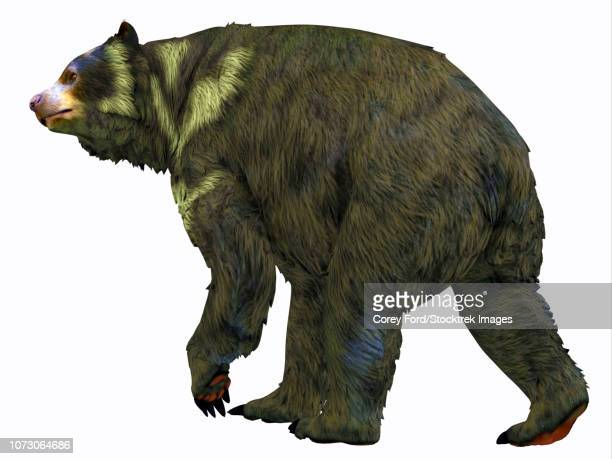 Arctodus bear, white background.
